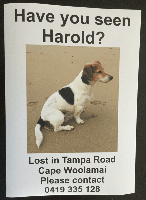 Have you seen Harold?