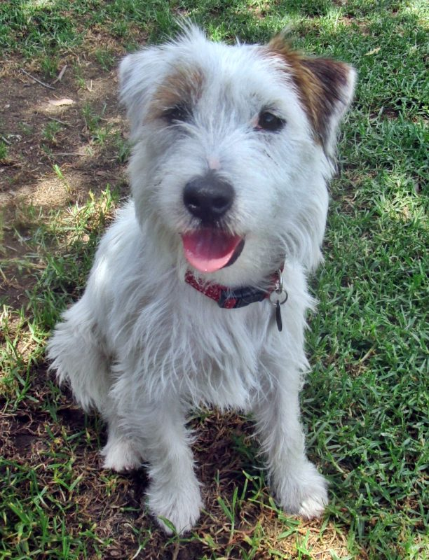 bobby jack russell