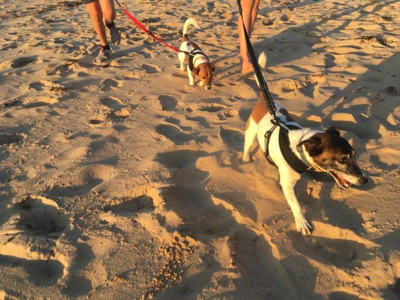 Buddy & Chloe enjoying the beach
