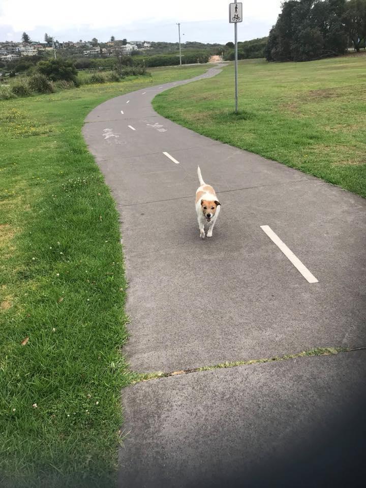 Livi on a walk