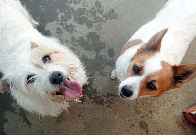 Daisy & Rusty