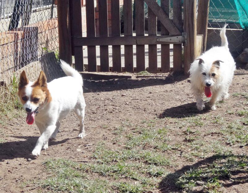 Rusty & Daisy