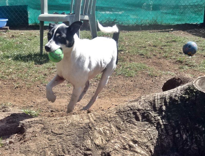 Jacob loves playing ball