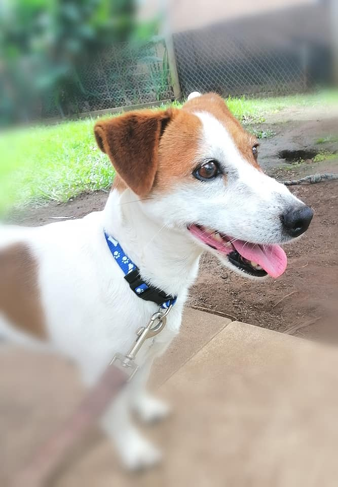 Sasha is looking for a loving home