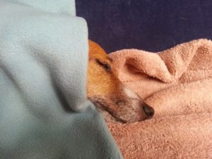 Lochie snuggled under the blankets