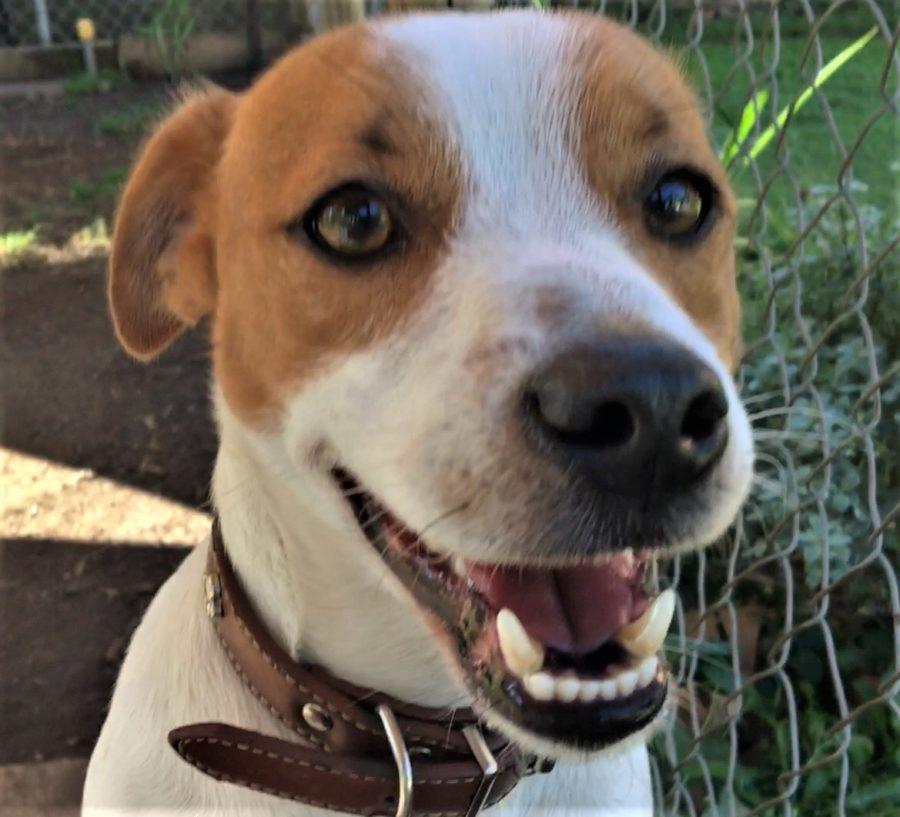 Wilbur′s ′happy′ face