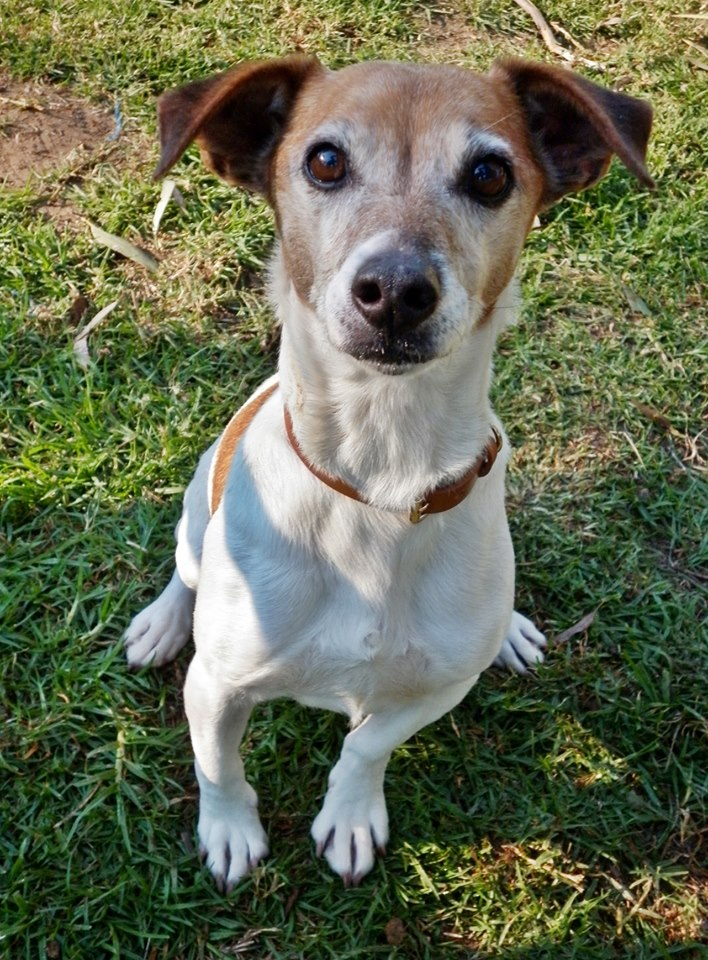 Baby Boy would love a new family to love
