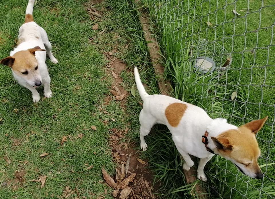 Cleo and Josh looking for a home together