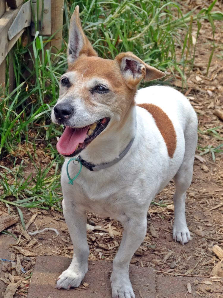 Jacky is a gorgeous older gentleman