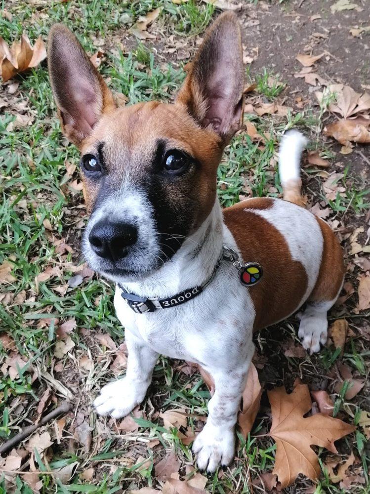 Puppy Gus